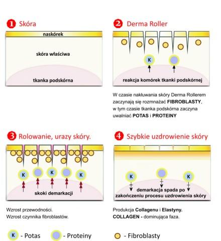Derma Roller działanie